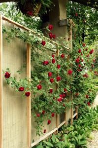 locksmiths manchester roses